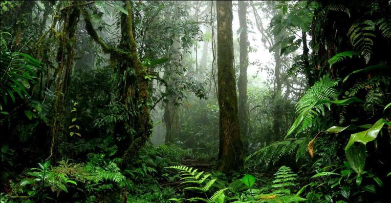 S'il ne fallait prendre qu'un seul objet avec toi dans ta valise, lequel choisirais-tu pour partir en voyage dans une jungle ?