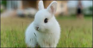 Est-ce que le lapin est un rongeur ?