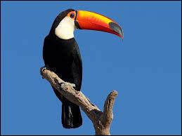 De quelle espèce est le toucan ?