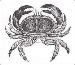 Quelle est la classification du crabe de feu ?