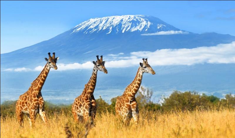 Le Kilimandjaro est une montagne au Kenya.