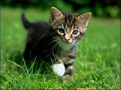 En quel âge de faire courir des helminthes aux chatons
