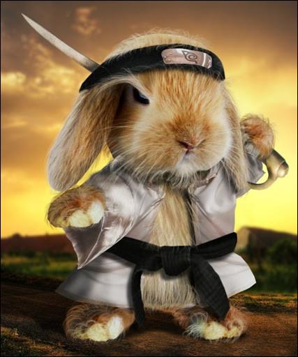 Quel est cet animal, déguisé en ninja ?
