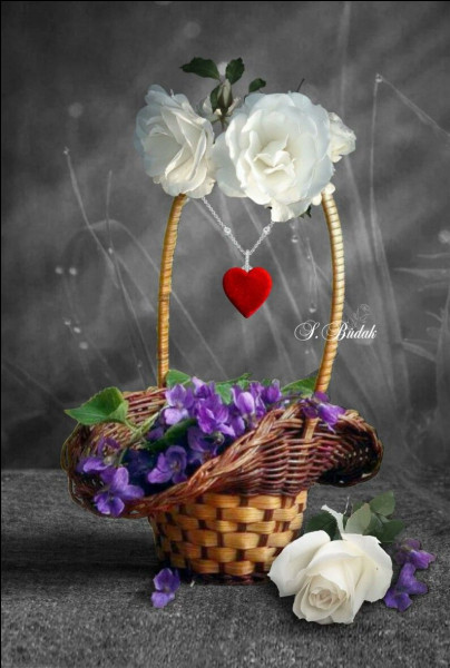 Et une dernière pour profiter du bénéfice des fleurs de printemps. Autrefois nos anciens cueillaient les violettes pour en faire des infusions. Quelles sont leurs propriétés ?