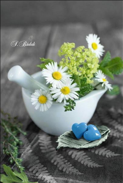 Pour qui le printemps chante-t-il, quand il vous invite à la maison ?