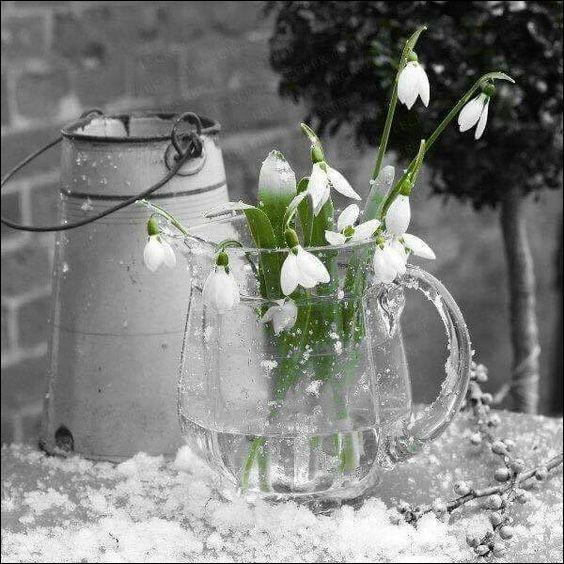 Si je vous écris que ces belles fleurs de printemps sont des perces-neiges, que penserez-vous ?