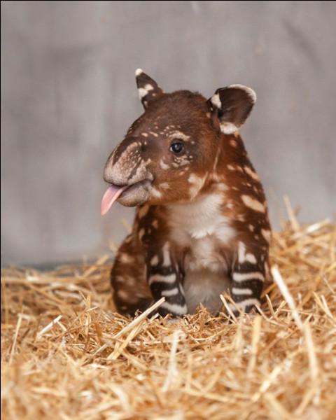 Que mange le tapir ?