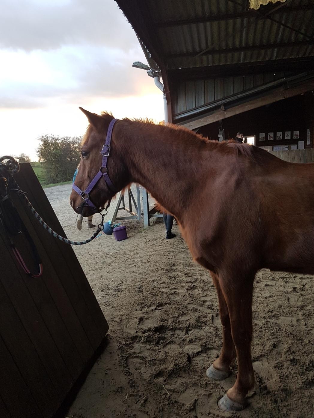 Tes connaissances sur les chevaux