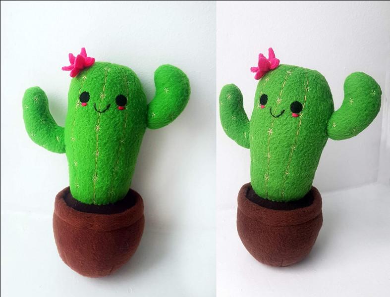 Un cactus se trouve généralement dans le désert :