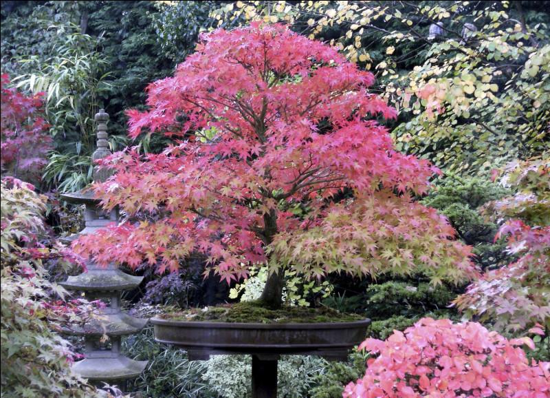 Puis-je mettre cet arbre pour renforcer l'ambiance japonisante ?