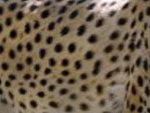 Quel animal ?