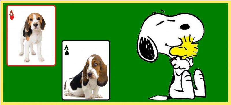 À quelle race de chien appartient Snoopy ?