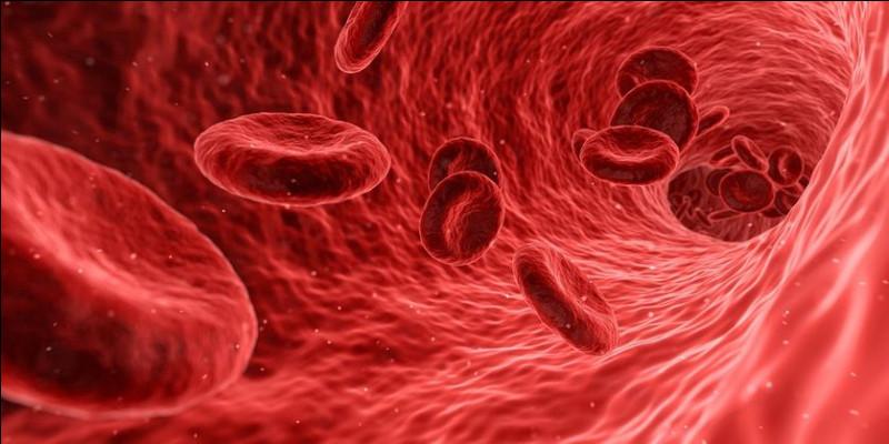 Le sang est rouge :