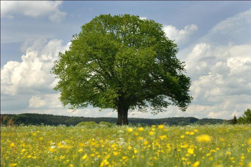 Les vers de terre habitent dans les arbres :
