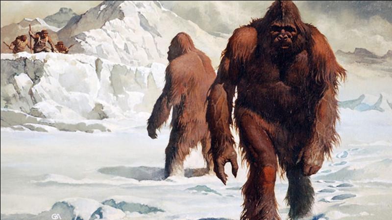 Abominable créature des montagnes surgissant au coeur des plus violentes tempêtes de neige, le yéti alimente encore aujourd'hui de nombreuses légendes et terrifie les petits enfants. Récemment, après analyse de certains fragments d'os supposés appartenir au yéti et exposés dans divers musées himalayens, une équipe d'expert est parvenu à une conclusion pour le moins surprenante ! Laquelle ?