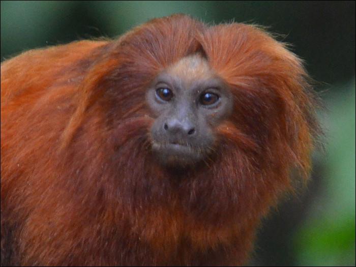 Quel est ce petit singe ?