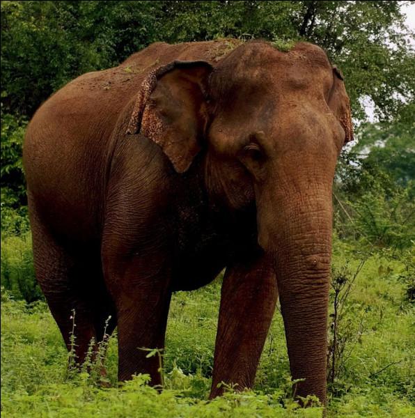 D'où vient cet éléphant ?