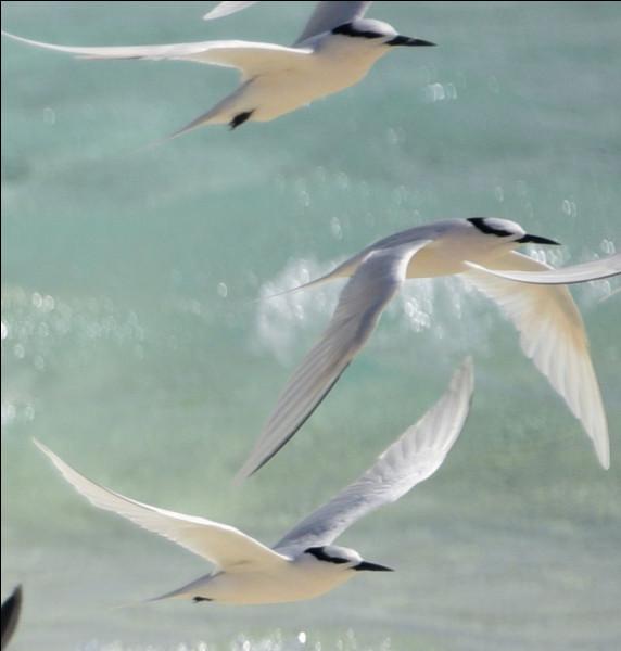 Comment s'appellent ces oiseaux ?
