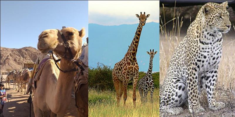 Animaux : On sait que la Grèce antique nous a donné de grands philosophes, scientifiques et autres grands hommes, mais là, on peut dire qu'ils n'ont pas eu le nez creux !Pour eux, la girafe était l'union entre… et comment appelaient-ils cet animal ?