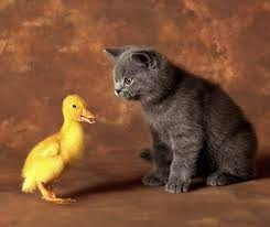 Chat, chien, lapin, canard !
