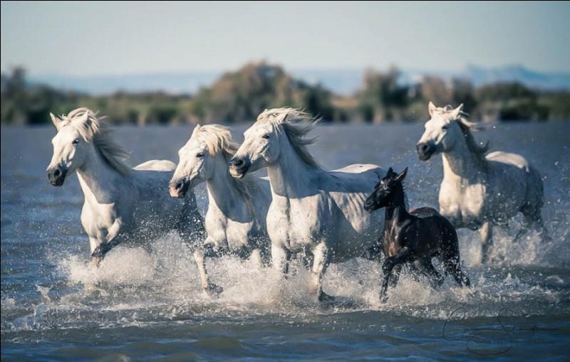 Les mustangs sont les plus connus des chevaux sauvages, mais il en existe d'autres, où vivent les chevaux en photo ?