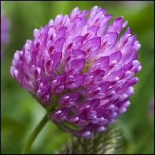 Et cette magnifique fleur, connais-tu son nom ?