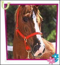 Comment s'appelle le cheval de Véronica ?