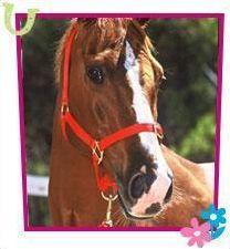Les chevaux de Grand Galop
