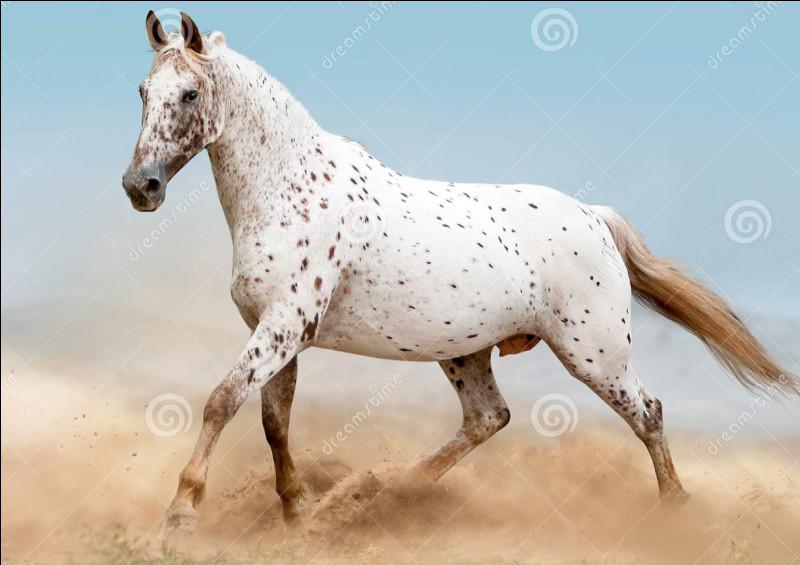 De quelle race est ce magnifique cheval ?