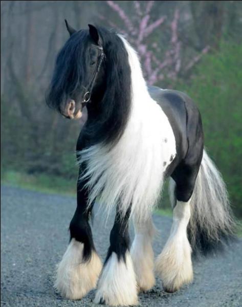 De quelle race est ce cheval ?