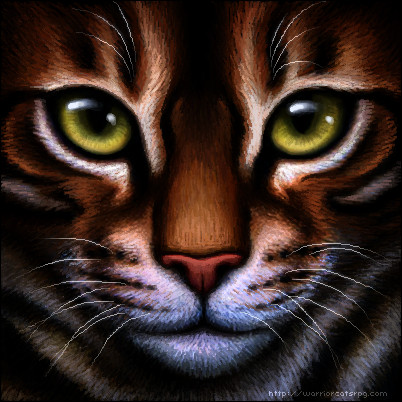 Griffe de Tigre se nomme...
