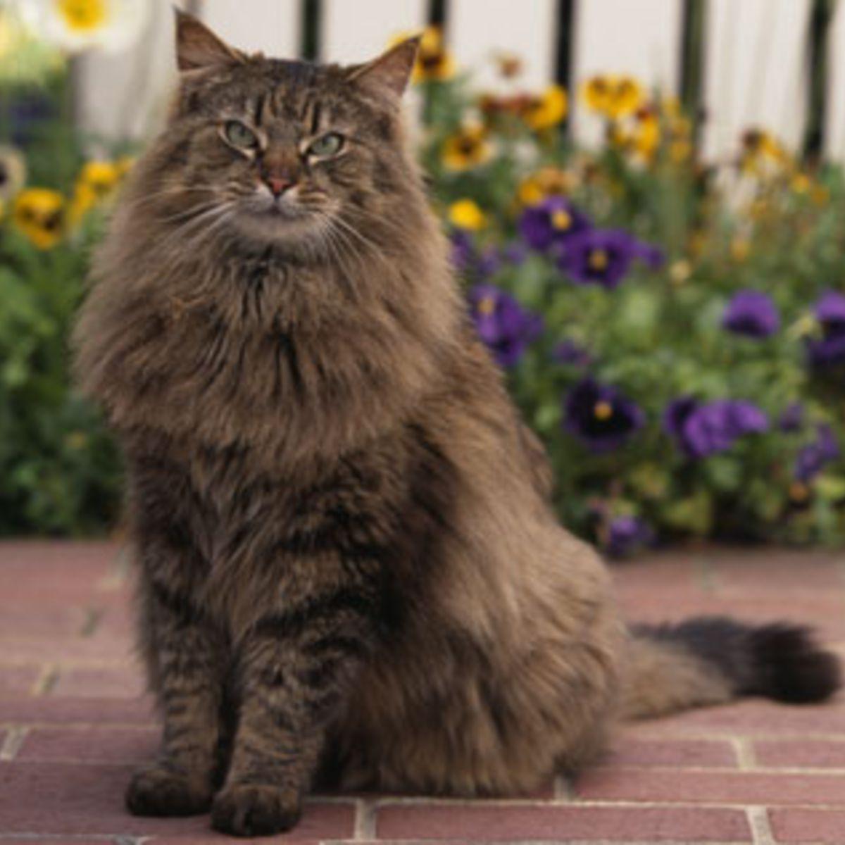 Des races de chats pour réviser