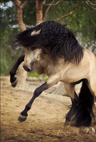Quels sont les cousins du cheval ?