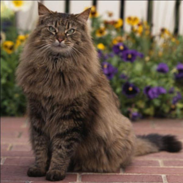 Comment appelle-t-on la famille des chats ?