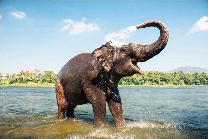 Comment appelle-t-on les cornes des éléphants ?(Il n'y en a pas sur l'image)