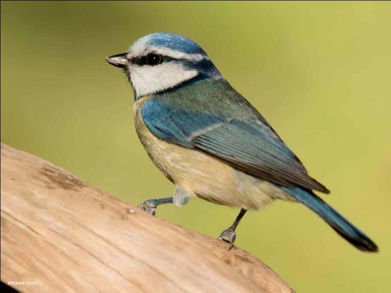 Comment appelle-t-on l'oiseau sur cette image ?