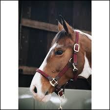 À quel équipement fixe-t-on une longe pour mener son poney ?