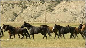 Lequel de ces noms ne désigne pas une race de cheval revenue à l'état sauvage ?