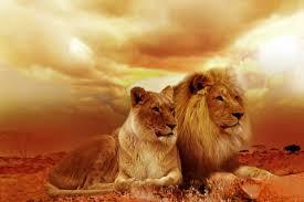 Es-tu un lion ou une lionne ?