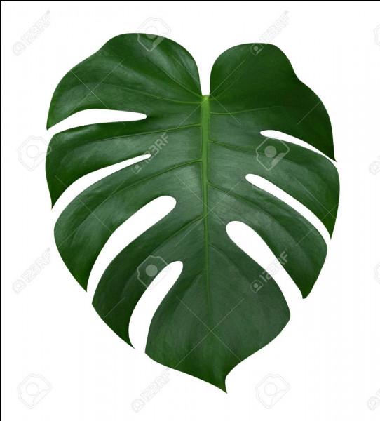 Les feuilles mortes, les brindilles et les glands sont des déchets verts.