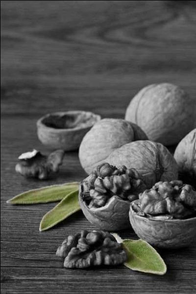 À quoi correspond le péricarpe dans une noix ?