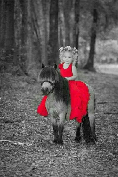 Quelle est la taille maximale d'un poney (au garrot) ?