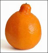 Quel est cet agrume provenant de l'hybridation d'un mandarinier et d'un pamplemoussier ?