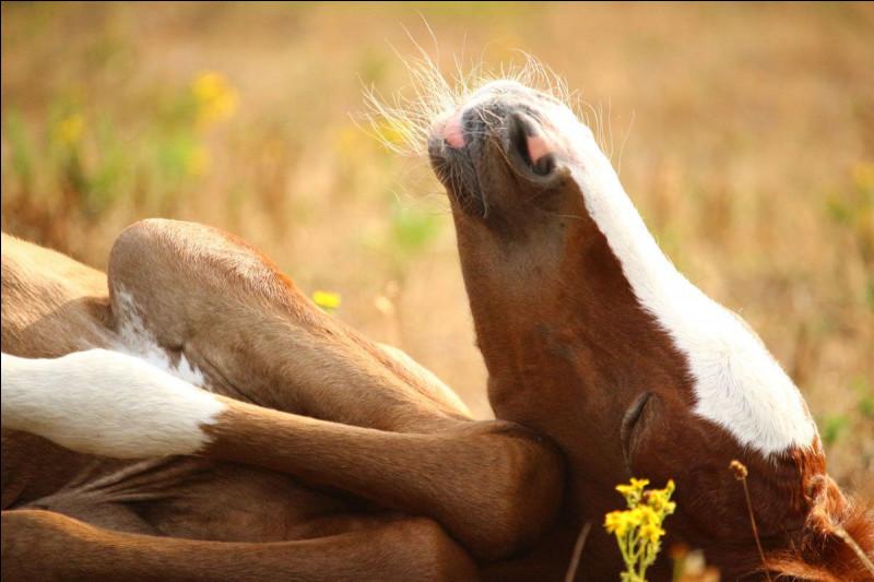 On sait qu'un cheval est détendu quand…