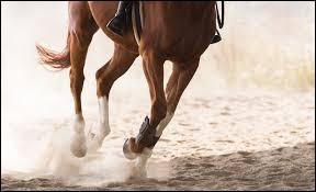 Il n'y a aucun muscle sur les jambes d'un cheval.