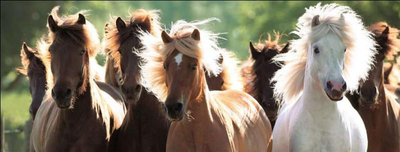 Existe-t-il encore des chevaux réellement sauvages ?