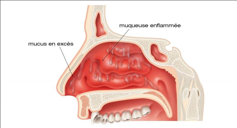Quel est le rôle du mucus qui tapisse la cavité nasale ?
