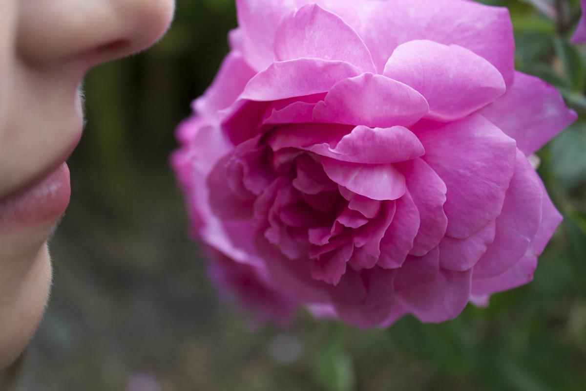Connaissez-vous ces fleurs aux magnifiques odeurs ?