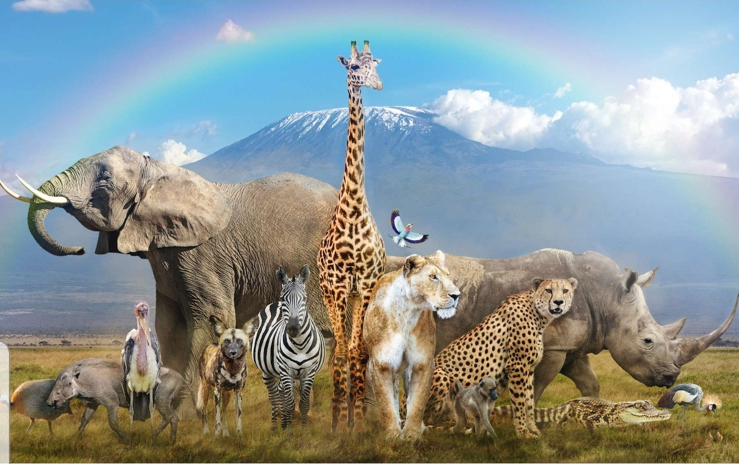 Connais-tu vraiment bien les animaux ?