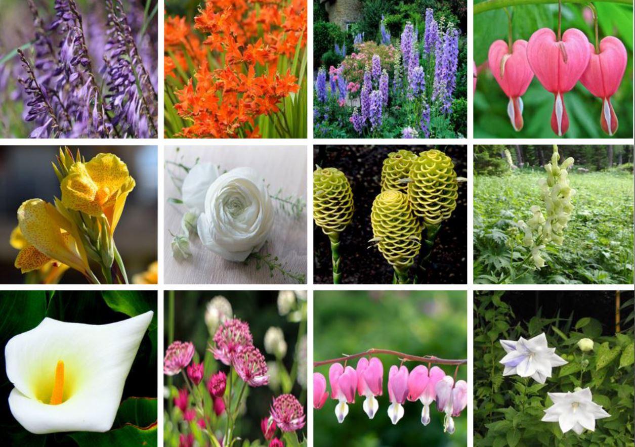 Les senteurs florales